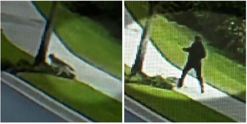 Captado en cámara un hombre que pateaba a un coyote afuera de un resort en Florida