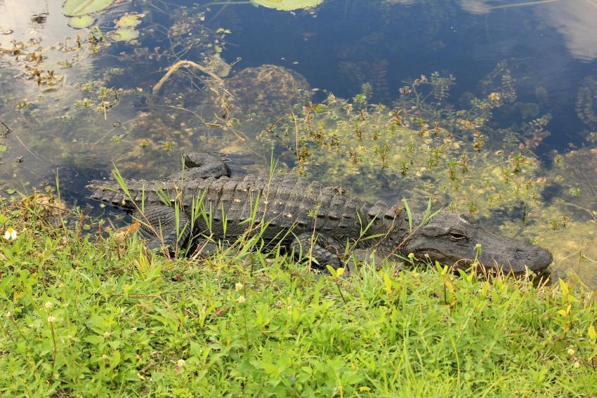 Parques nacionales de Florida se mantienen limpios y abiertos a pesar del cierre del gobierno gracias a la colaboración de varias asociaciones