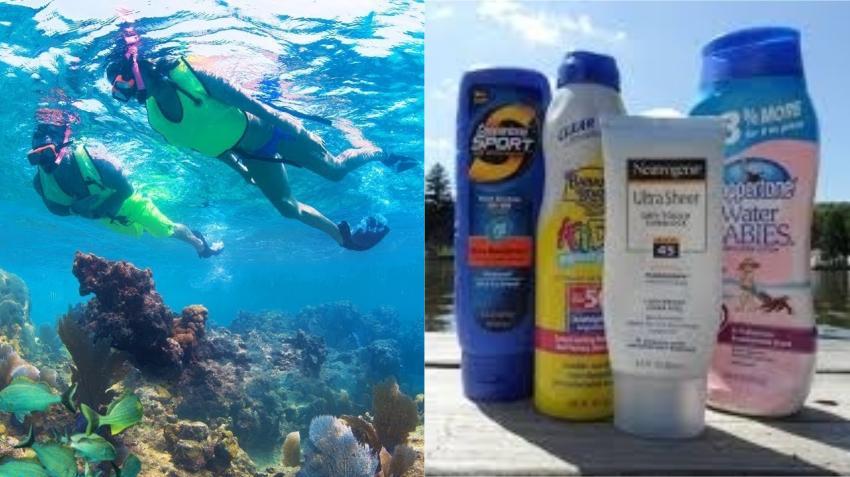 Grupo en Key West se opone a la prohibición del uso de determinados productos de protección solar que dañan los arrecifes