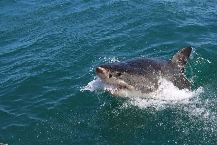 Un adolescente es mordido por un tiburón mientras surfeaba en una playa de Florida