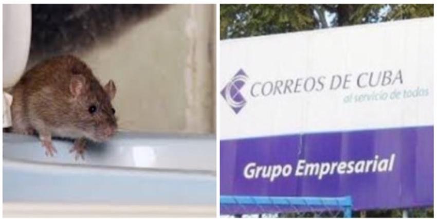 """Correos de Cuba entregó paquetes """"ripiados y mordisqueados"""" por una rata, tras almacenar envíos en un baño"""