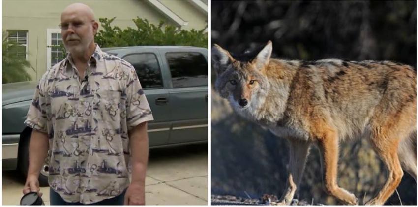 Hombre de Florida y su mascota fueron atacados por un coyote agresivo