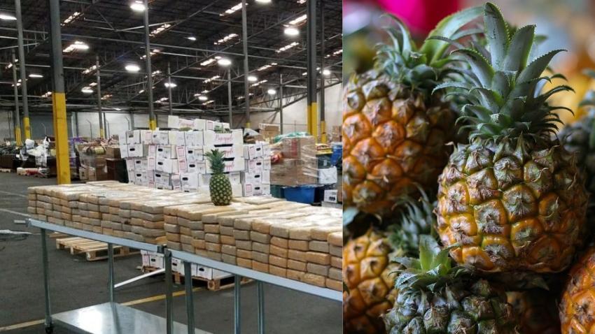 Aduana de Estados Unidos incauta cargamento de piñas colombianas llenas de cocaína con un valor de $19 millones de dólares