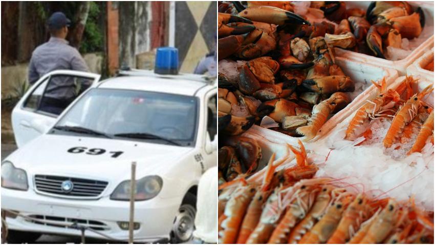 Policía en Cuba decomisa 15.700 kilogramos de langosta, camarón, pescado y tortuga que iba para restaurantes privados
