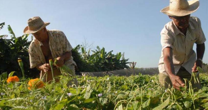 Gobierno cubano presiona a los campesinos para que resuelvan la crisis de alimentos que tiene el país