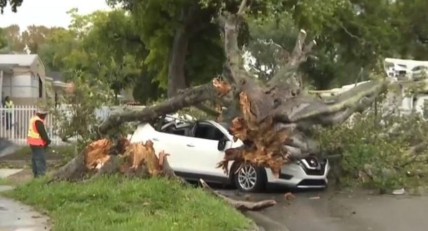 Árbol cae sobre un automóvil en Miami destrozándolo; aparentemente debido a fuertes vientos