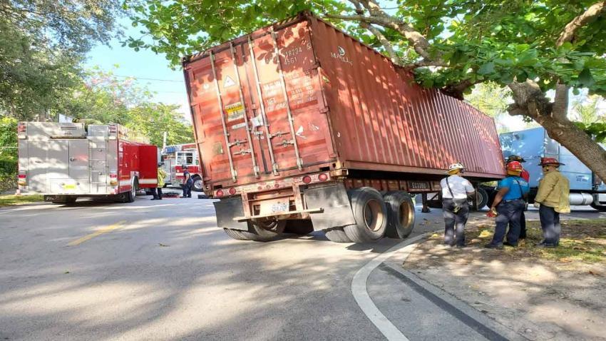 Un camión de carga queda atascado debajo de las ramas de un árbol en Miami