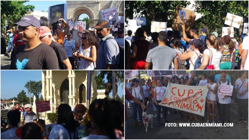 Así fue la marcha en Cuba contra el maltrato animal