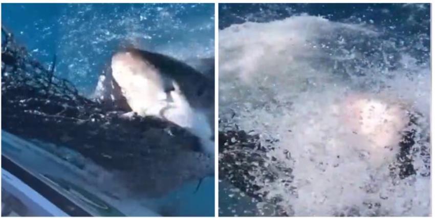Navegantes se topan con un tiburón hambriento en los Cayos de la Florida