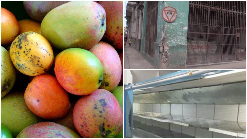 En medio de la escasez, Cuba comienza a exportar mangos frescos a Europa