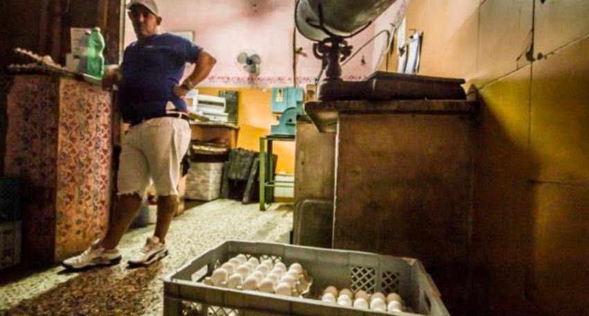 Cuba anuncia se sobrecumplió el plan de producción de huevos en mayo, pero en los comercios estatales siguen sin vender el producto