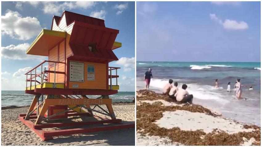 """No hay que alarmarse con la aparente """"suciedad"""" de las playas de Miami-Dade, son solo algas marinas, parte del ecosistema"""
