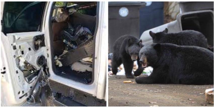 Un grupo de osos hambrientos destrozaron un SUV en el condado Collier, Florida