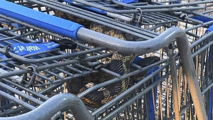 Una serpiente en un carro de compra de Walmart crea pánico entre los clientes