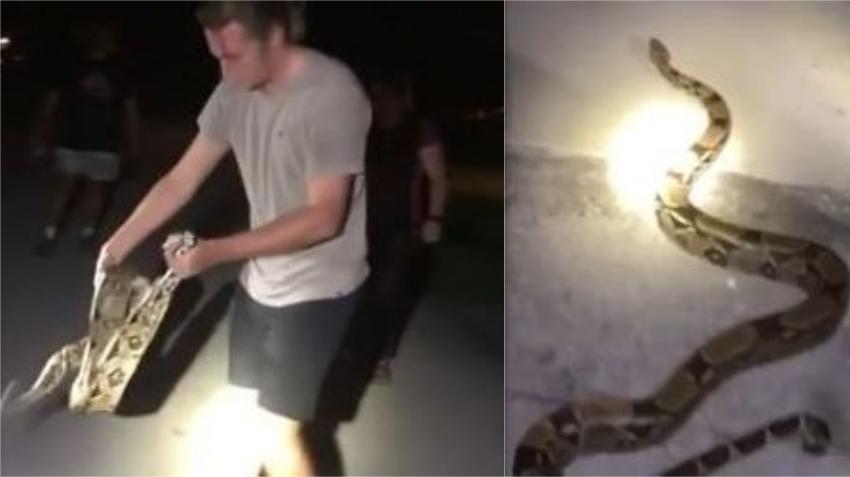 Un hombre saca una serpiente Boa de adentro de un carro y se la queda como mascota