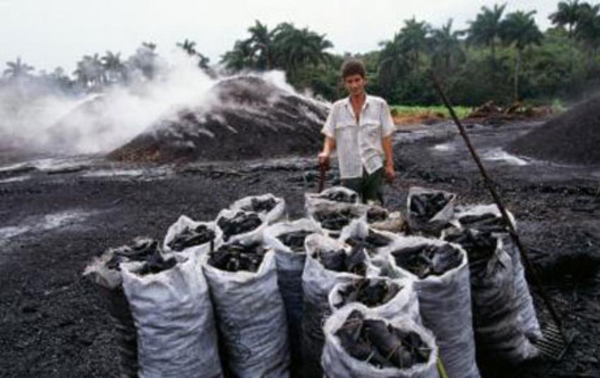 Empresas estadounidenses siguen importando carbón de marabú de la Isla comunista