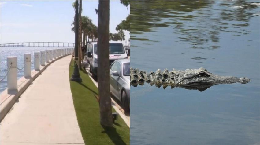 Residentes en Brickell alertan sobre un cocodrilo o caimán visto nadando en la bahía