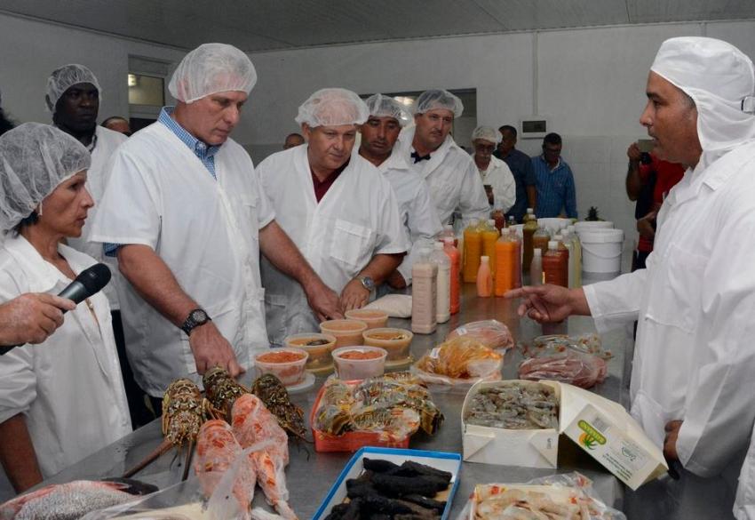 Miguel Díaz-Canel posa rodeado de pescado y mariscos y causa indignación entre los cubanos