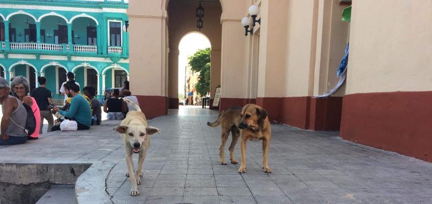 Denuncian han envenenado a perros callejeros en Santa Clara para limpiar la ciudad, por aniversario de fundación