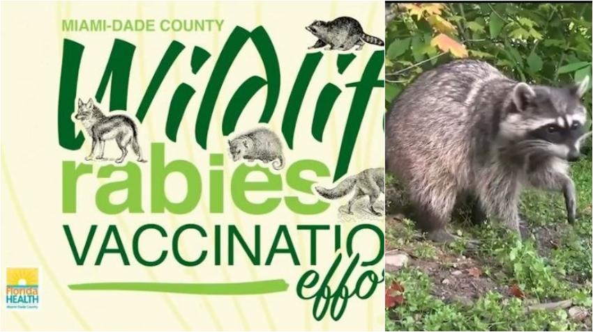 Miami Dade propone plan para prevenir la rabia en animales salvajes en el sur de Florida