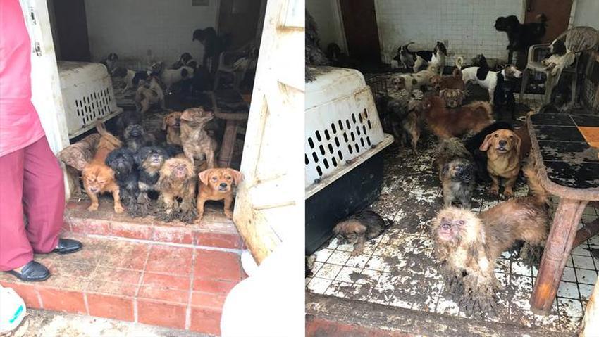 Encuentran en una vivienda en Miami 99 perros y 5 gatos en condiciones deplorables