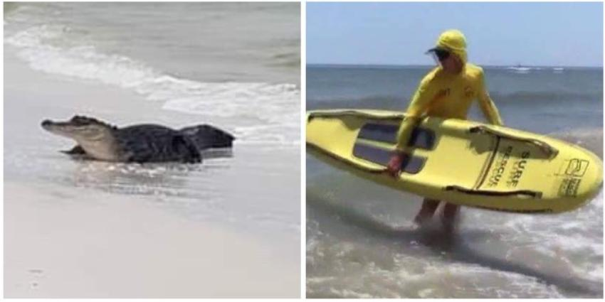 Surfista intenta sacar a un cocodrilo de una playa de Florida con sus propias manos