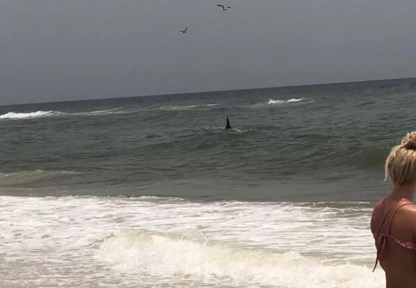 Un inmenso tiburón martillo se pasea por una playa de Florida a escasos metros de la orilla