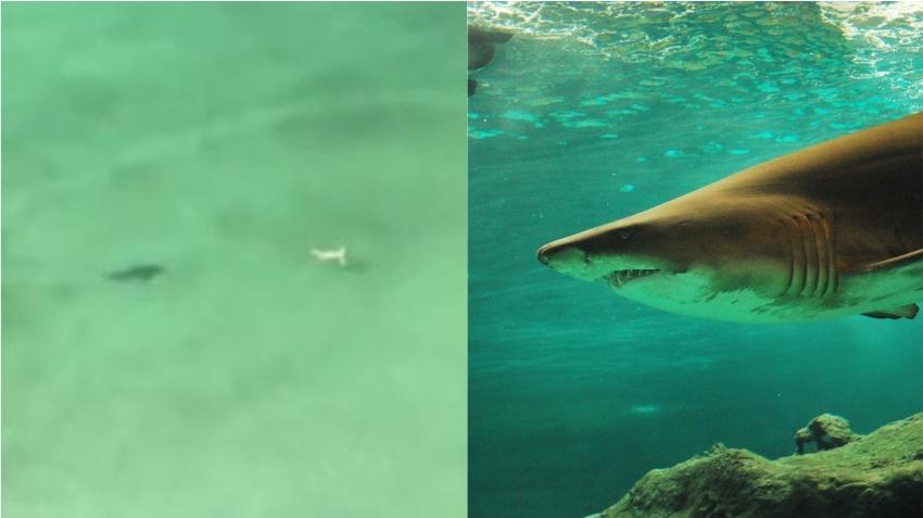 En cámara momento en que un tiburón acecha a bañista en una playa de Florida
