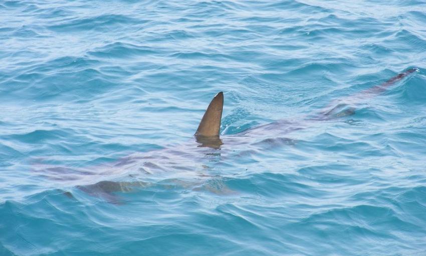 Avistamiento de tiburones en las playas de Florida provocan advertencia de las autoridades a estar alertas