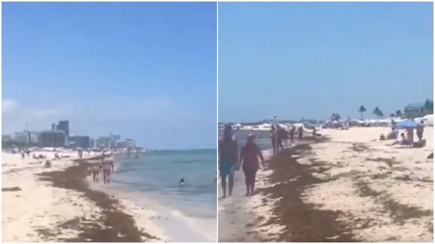 Condado de Miami-Dade planea lanzar una ofensiva para recoger el Sargazo en las playas de Miami
