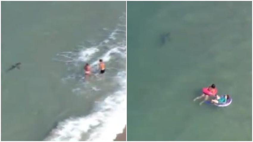 Tiburón se acerca peligrosamente a bañistas en playa de Florida