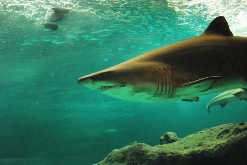 Tiburón muerde a una adolescente de 16 años en una playa del Sur de la Florida