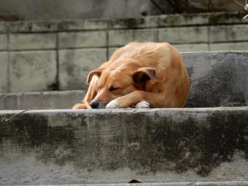 Autoridades en Cuba emplean un veneno prohibido a nivel mundial para sacrificar animales callejeros
