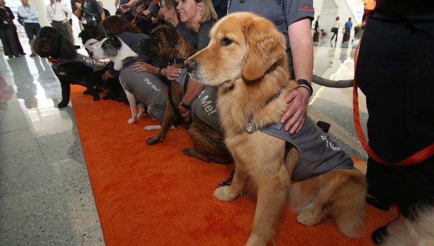 Pronto estarán disponibles los perros de terapia en el Aeropuerto Internacional de Orlando