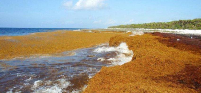 Sargazos invaden las costas de Cuba y alarman a los expertos