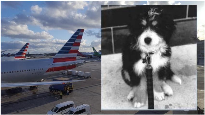 Una mujer demanda a American Airlines por encerrar su perro en un baño en un vuelo de LA a Miami