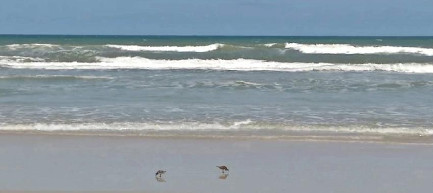 New Smyrna Beach en Florida, una de las playas con mayores ataques de tiburones a nivel mundial