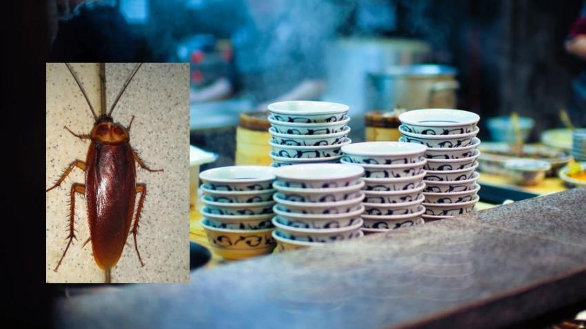 Autoridades sanitarias cierran temporalmente dos restaurantes en Miami por cucarachas entre otras violaciones