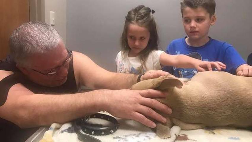 Un perro pitbull muere mordido por una serpiente venenosa protegiendo al niño de la casa