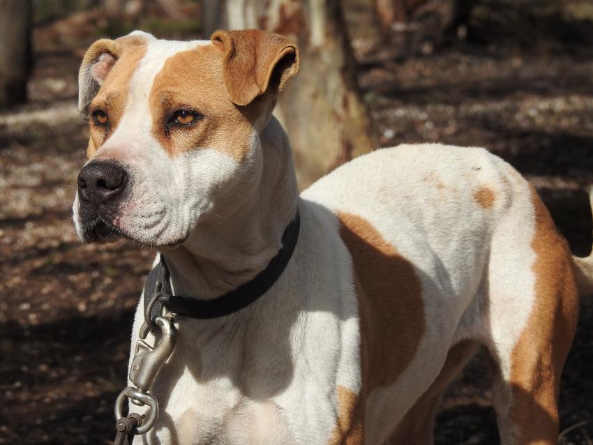 Aprueban en el Congreso una ley que penaliza la crueldad animal como una delito federal