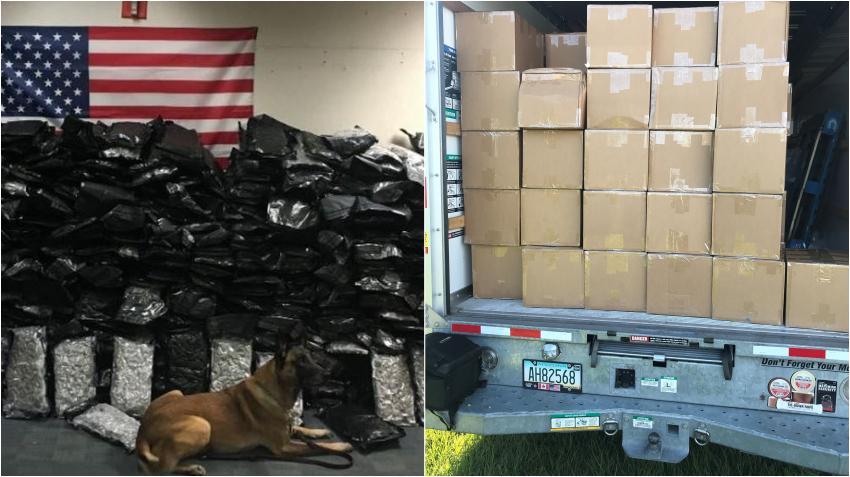 Perro de la unidad K-9 descubre 624 libras de marihuana en un camión de mudanza U-Haul en Florida