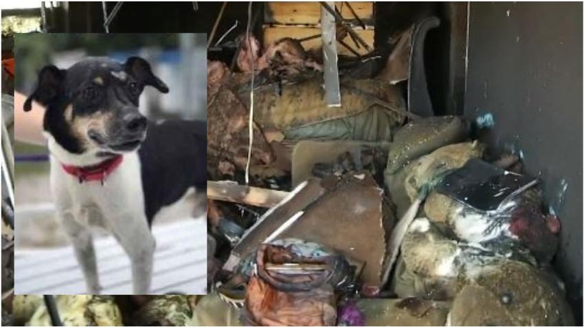 Un perro avisa poniendo a salvo a una familia de un incendio en la casa pero muere en el fuego sin poder ser rescatado