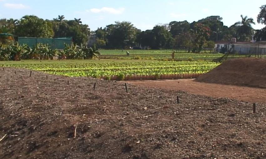 Severas afectaciones en la agricultura cubana por la crisis energética
