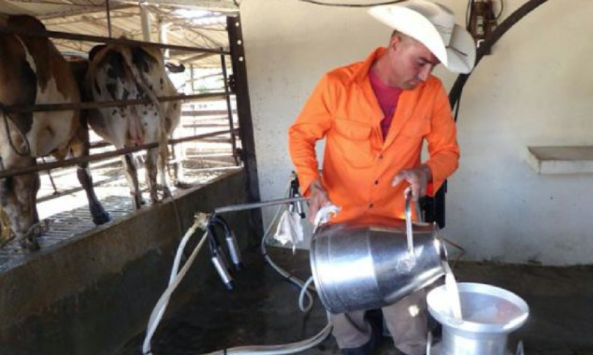 """La """"coyuntura"""" hace que se pierdan 3.000 litros de leche en Remedios por la escasez de combustible para el transporte"""