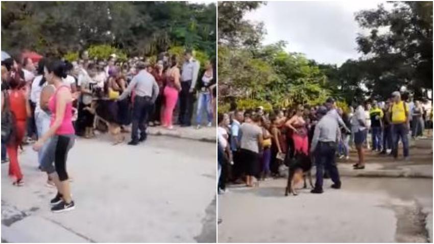 Policias en Cuba utilizan perros para controlar una cola en Holguín