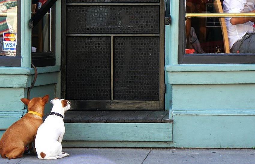 Proponen ley para prohibir la entrada de perros a cafeterías y restaurantes en Florida