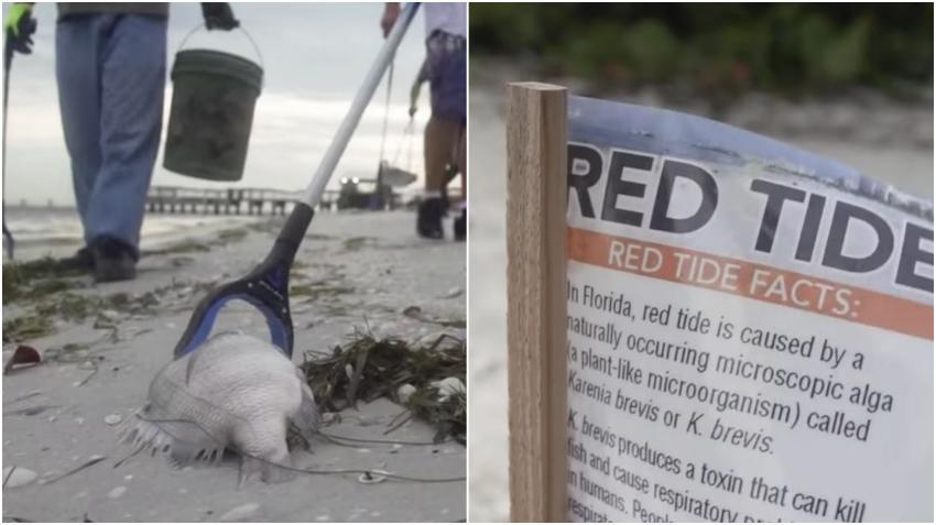 Científicos dicen que la marea roja está de regreso en las costas de Florida