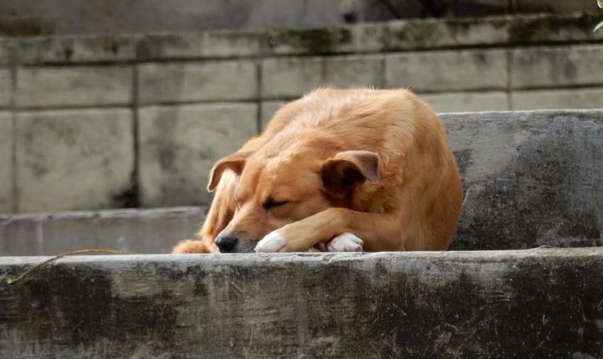 Petición para una ley de protección animal en Cuba supera las 10.500 firmas