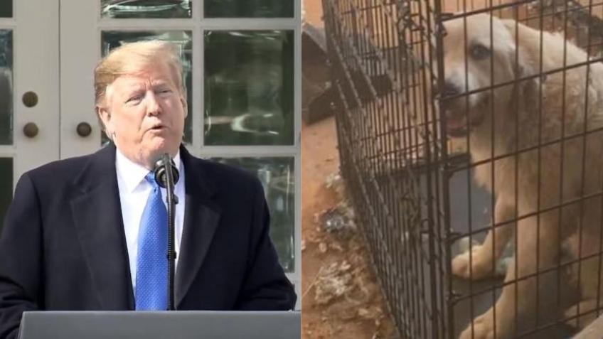 Presidente Trump firma ley que penaliza la crueldad animal como un delito federal