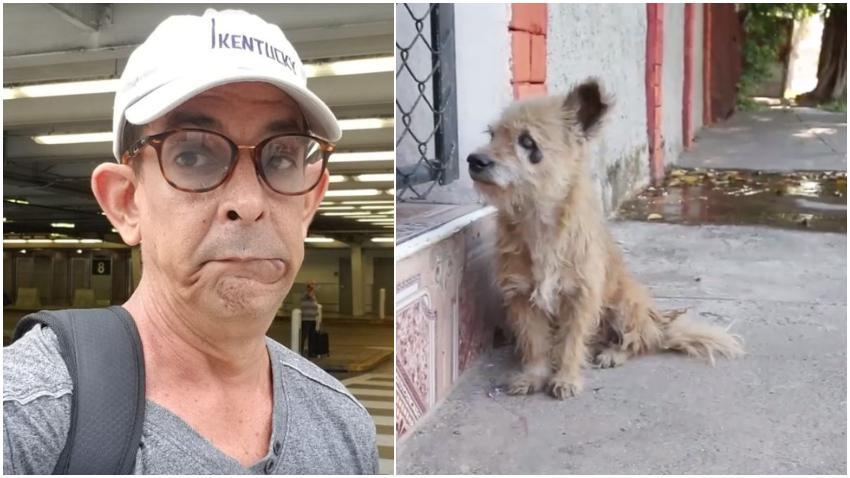 """Humorista cubano Ulises Toirac sobre la matanza de perros por parte del gobierno en las calles de Cuba: """"¿Qué miedo es el que hay con adoptar la Ley de Protección Animal en Cuba?"""""""